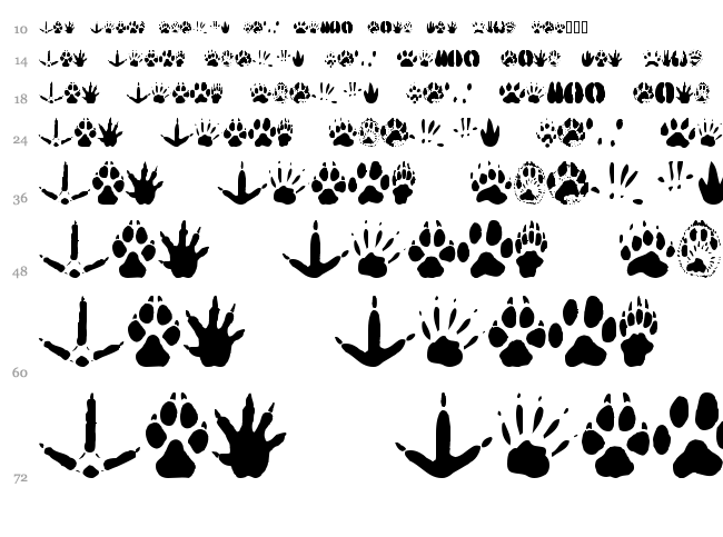 Animal Tracks font waterfall
